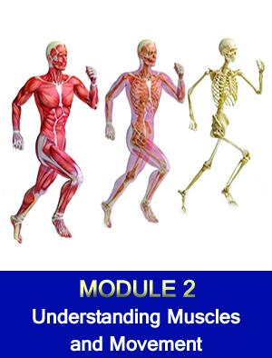 Understanding Muscles and Movement